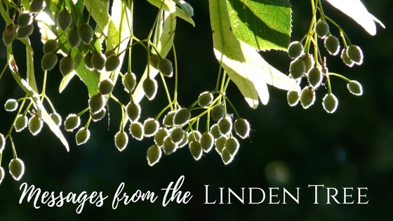 Messages from the Linden Tree for the week of November 18th, 2018