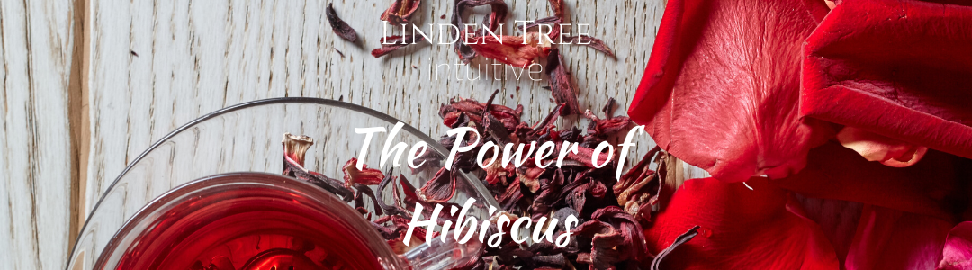 the power of hibiscus